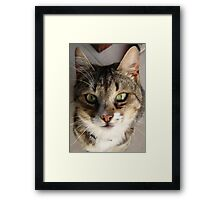 Tabby Cat Kitten Giving Eye Contact Framed Print