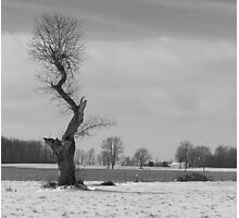 lone crooked tree Photographic Print