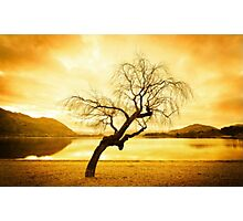 Another Tree in Wanaka Photographic Print