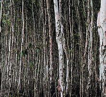 Paperbark Forest by Hans Schmidt