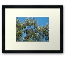 Blooming Gums  Framed Print