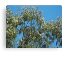 Blooming Gums  Canvas Print