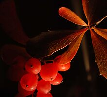 Leaves & berries by woolcos