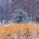 Winter Color by NatureGreeting Cards ©ccwri