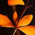 Leaves by woolcos