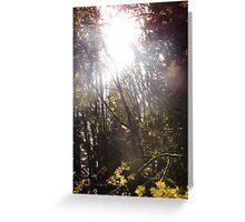 Autumn Sun Rays #43 Greeting Card