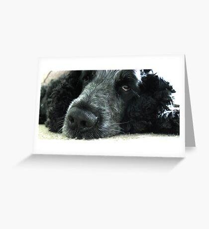 Spaniels Eyes - Blue Roan Cocker Spaniel Greeting Card