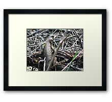 Lizard, My Lizard. Framed Print