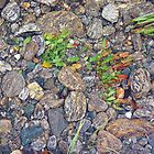 Stream Bed by Harry Oldmeadow