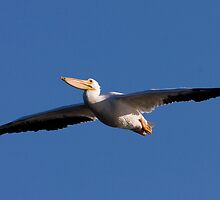 Wingspan by Phillip  Simmons