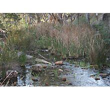 Mambray Creek, S.A. Photographic Print