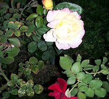 Friends of Rose by WaleskaL