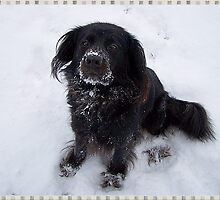 Mattie In The Snow by Jonice
