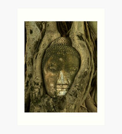 Budda Head in Tree Art Print
