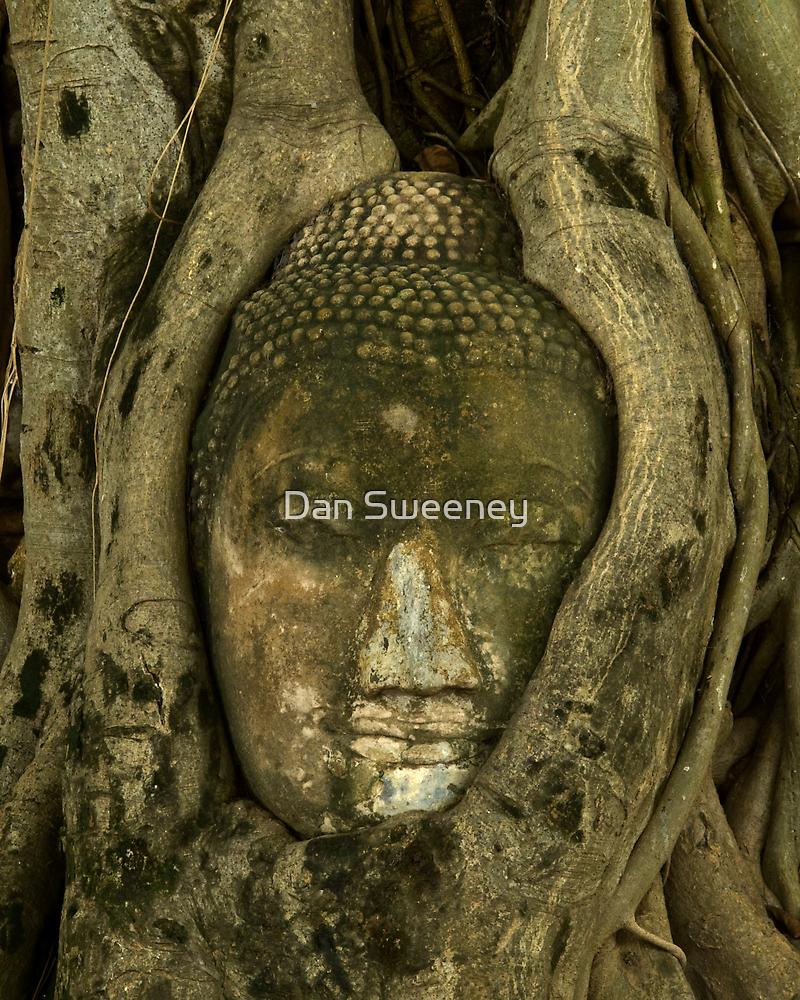 Budda Head in Tree by Dan Sweeney