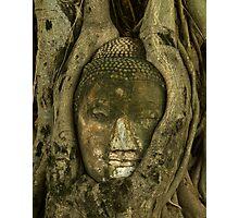 Budda Head in Tree Photographic Print
