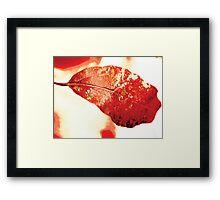 Red leave Framed Print
