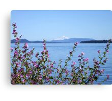 A Touch of Pink Canvas Print