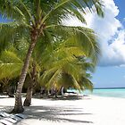 Palm Trees, Blue Skies and White Sand by WaleskaL
