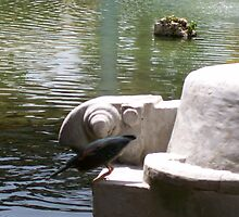 Bird working with Turtle by WaleskaL