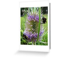 Tasmanian bumble bees Greeting Card