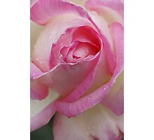 Pink Souffle Photographic Print