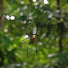 The Web by Nickolay Stanev