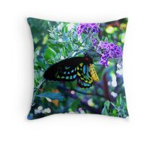 Male Cairns birdwing  Throw Pillow
