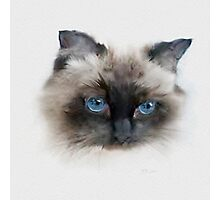 Black Cat with Blue Eyes Photographic Print