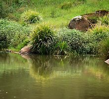 Lush Green - Manning River NSW by Bev Woodman