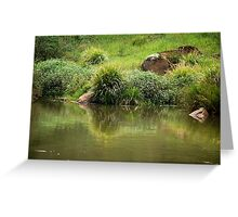 Lush Green - Manning River NSW Greeting Card