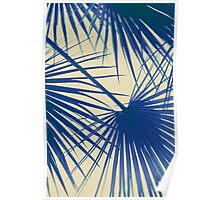 Cool Palm Frond Poster
