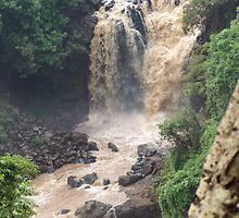 Blue Nile Falls by Laurel Talabere