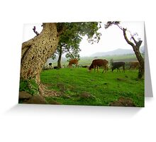 Cows Framed by an Old Tree Greeting Card