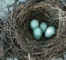 Bird Nest Sticker