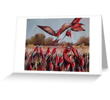 Carmine bee eaters  Greeting Card