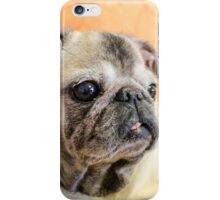 Pug dog iPhone Case/Skin