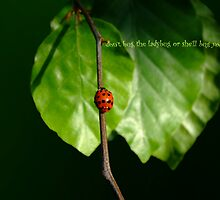 don't but the lady bug or she'll bug you ... by Fran E.