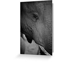 Elephant potrait Greeting Card