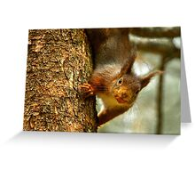 Cheeky Red Squirrel Greeting Card