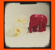Little elephant Kids Clothes