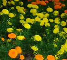[flowers] by xtianne