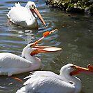 Three Pelicans by Teresa Zieba