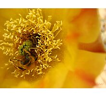Too Bee or Not Too Bee Photographic Print