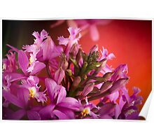 Orchids Macro Poster