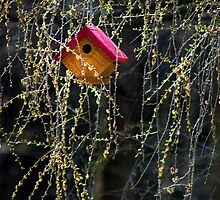 Birdhouse by Christina Rollo