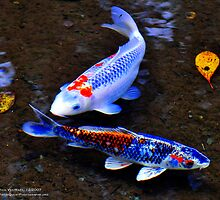 Koi Duet, Byodo-In Temple, Valley of the Temples, Kaneohe, Hawaii by Richard VanWart