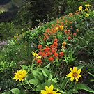 Hells Canyon Wild Flower by Nolan Nitschke
