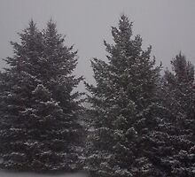 First snow storm of '08 by Melzo318
