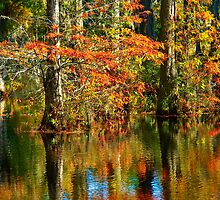 Cypress Gardens SC by Leta Davenport